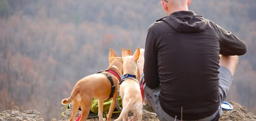 Travel Tips for Travelling With Pets